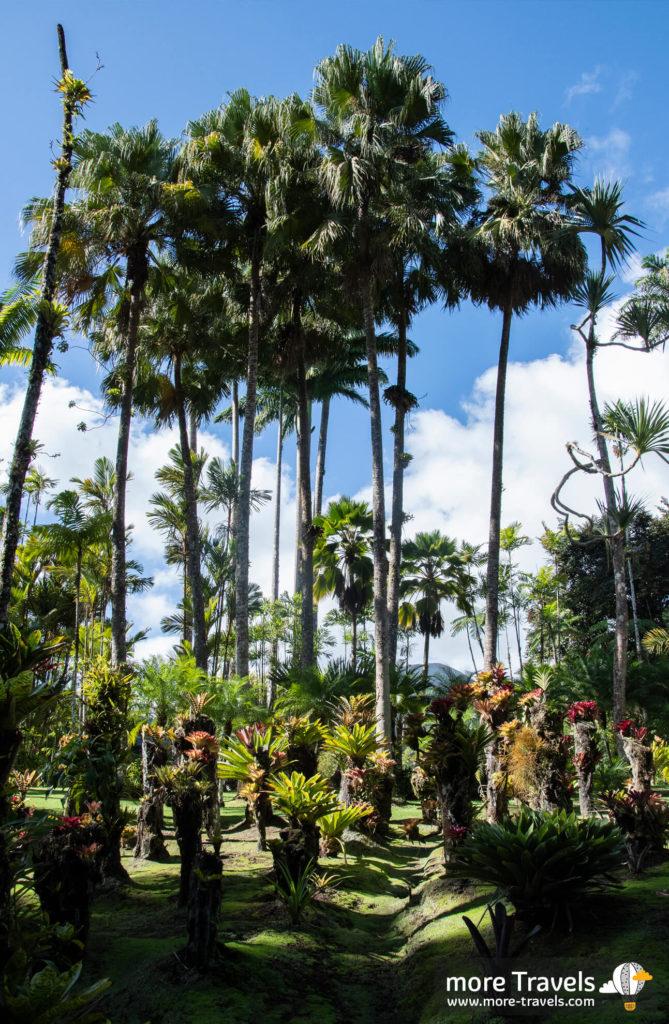 Jardin de Baklata - ogród botaniczny na Martynice