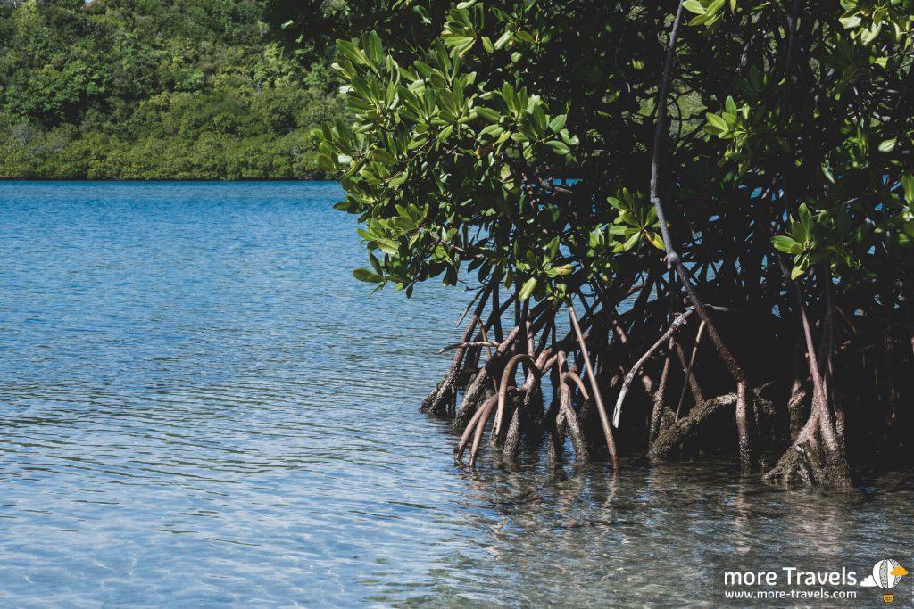 Martynika las namorzynowy