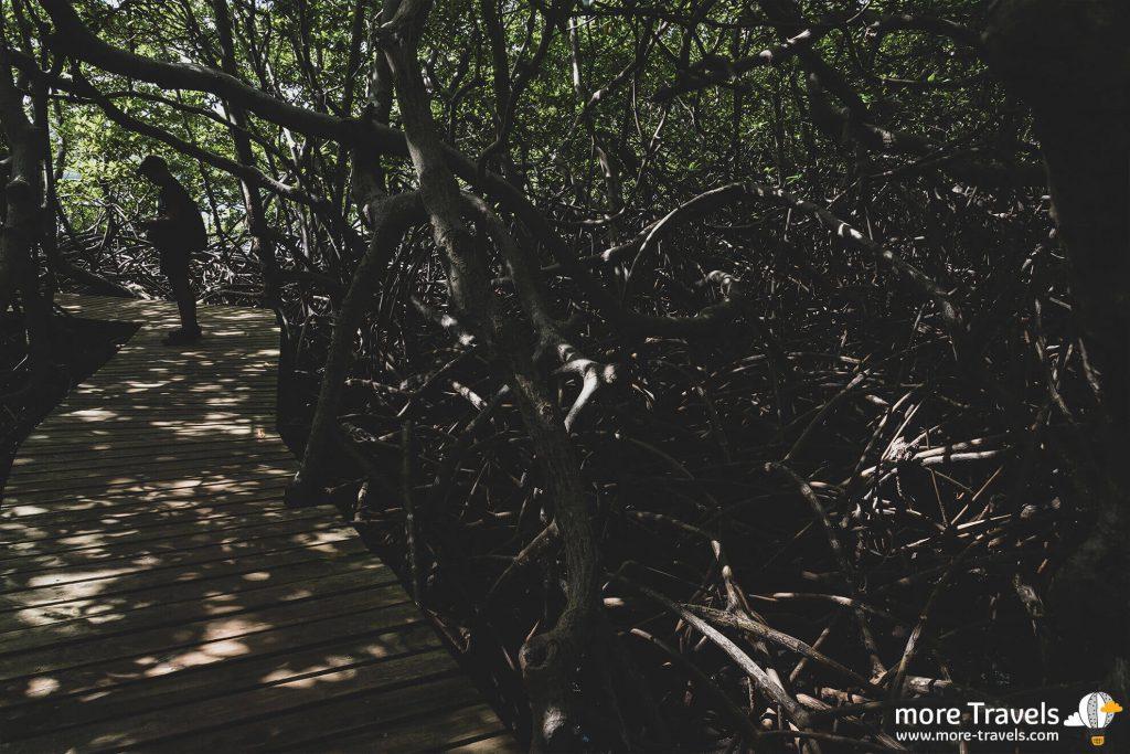 Martynika lasy namorzynowe