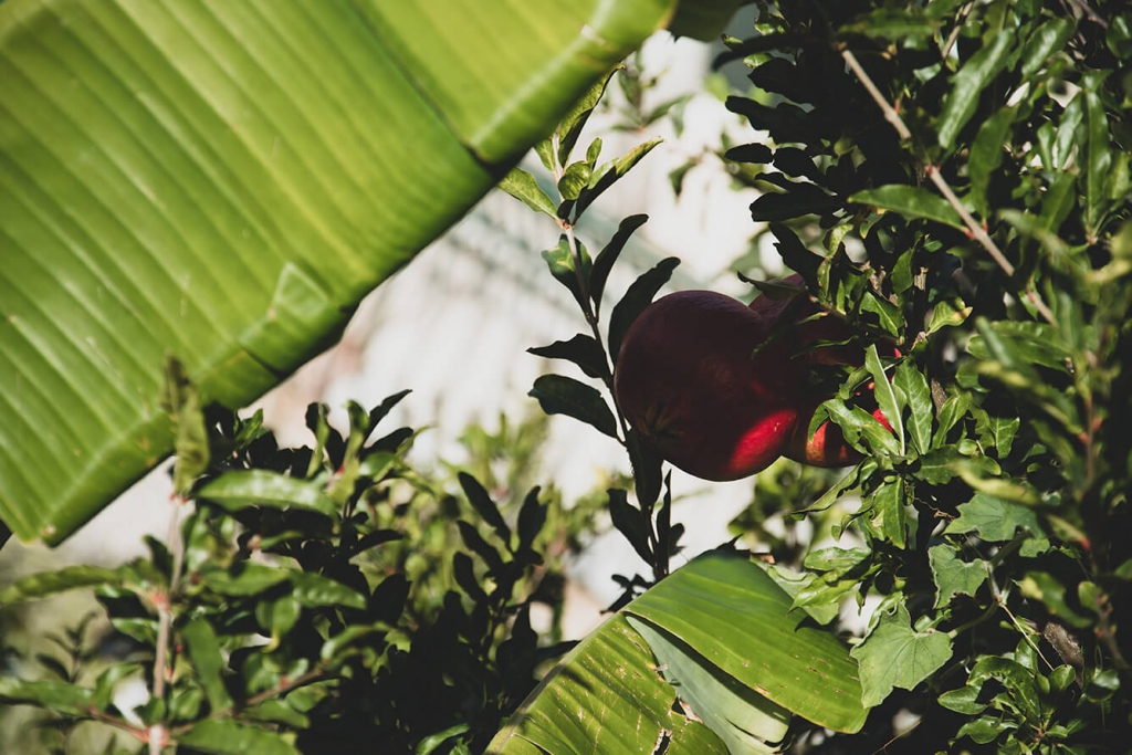 Granat na drzewie