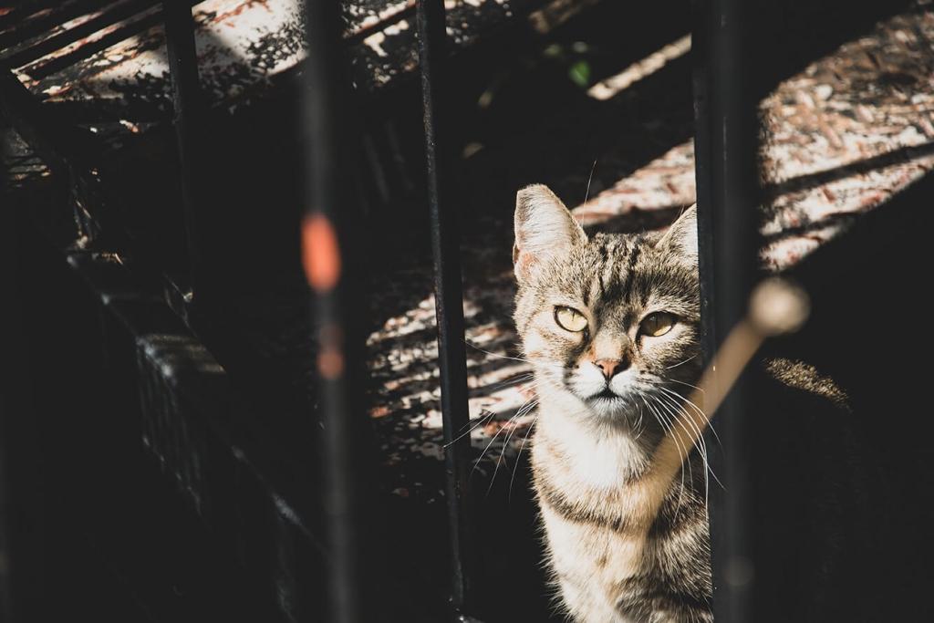 Greckie koty